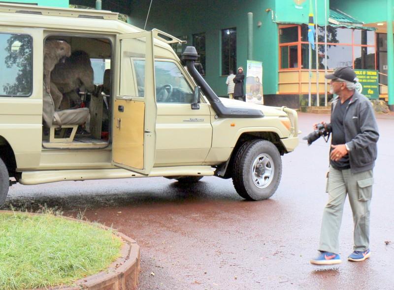 Baboon Bandits in the van