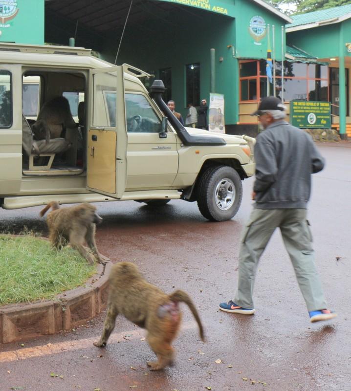 Baboon Bandit standoff