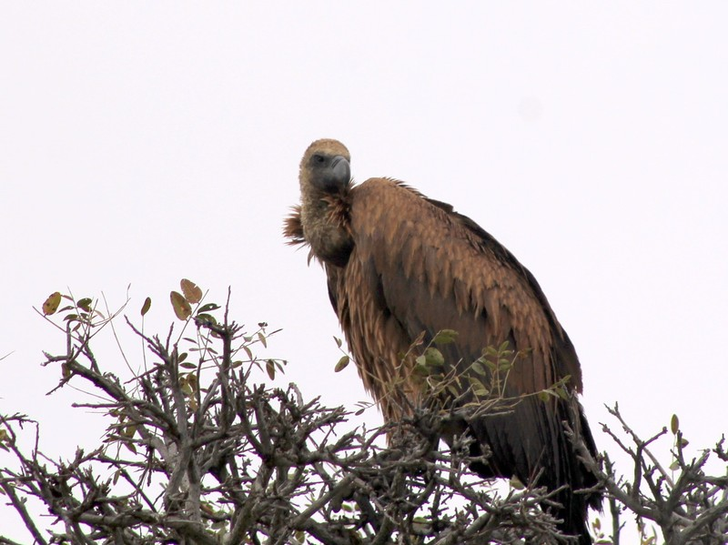 my granddaughter's vulture photo
