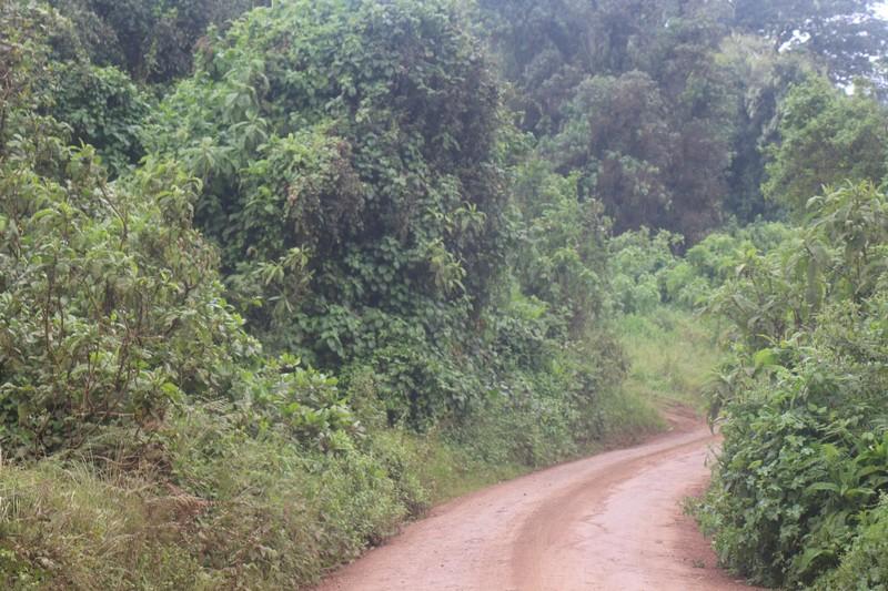 Road down