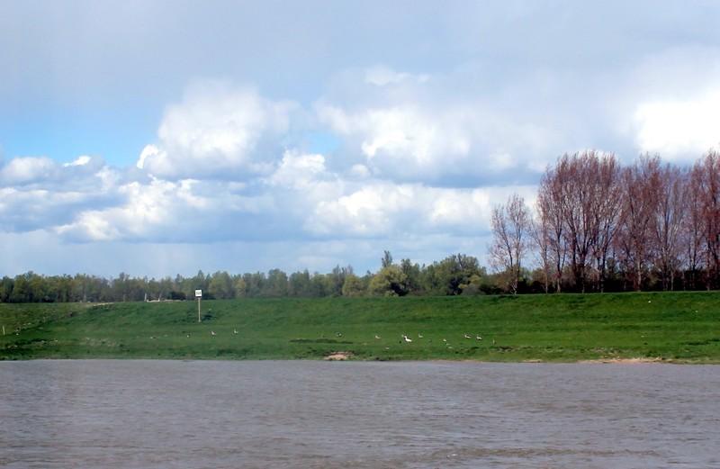 Ducks on shore