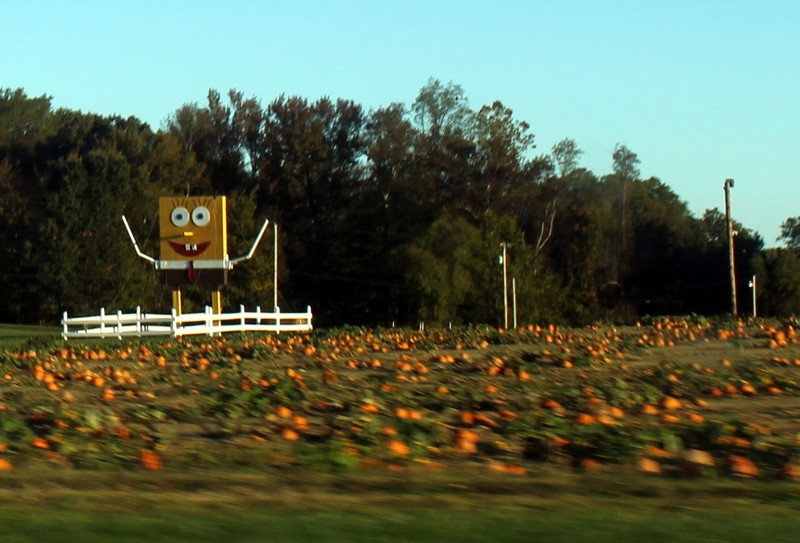 Spongebob in the Pumpkin field as we were leaving our county