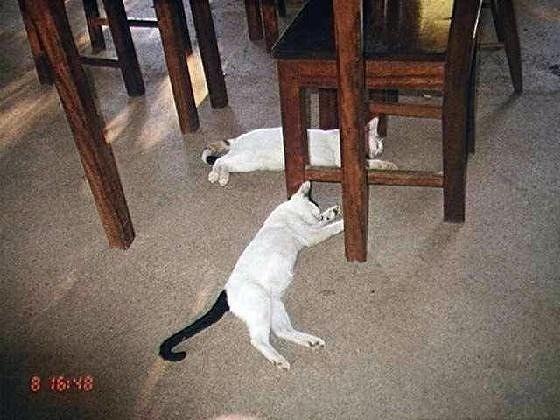 Cats sleeping on the restaurant floor