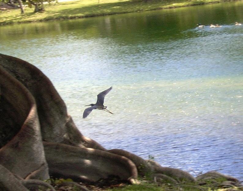 Heron or egret
