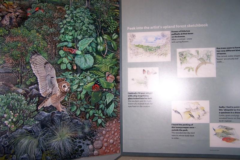 Upland forest ecosystem
