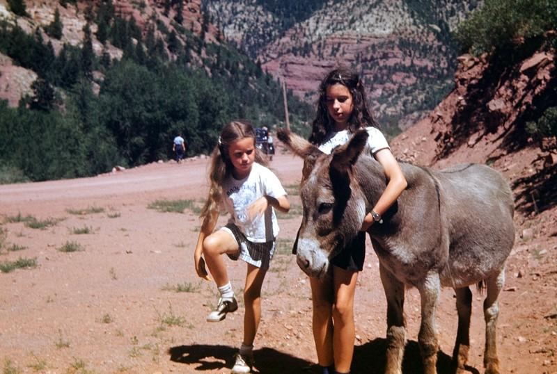 """Holding"" the other donkey"