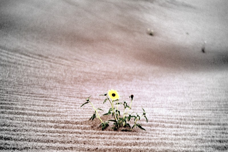 Flowers growing in sand