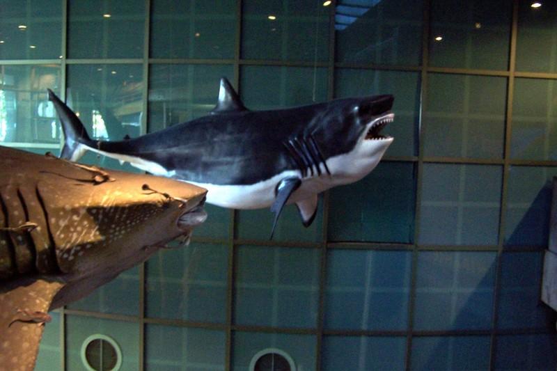 Model sharks