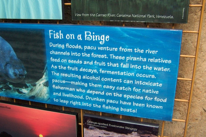 sign about piranhas