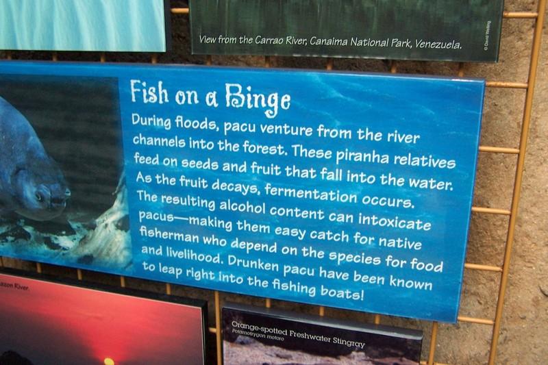 sign about piranhas