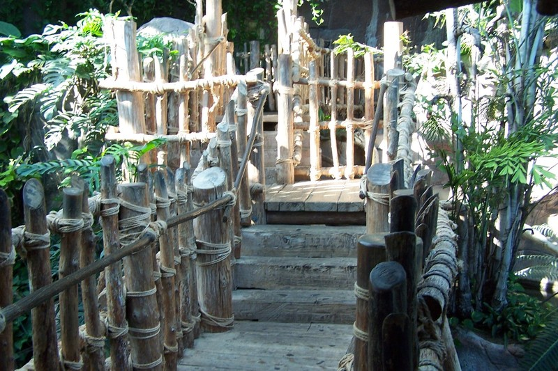 steps in aviary