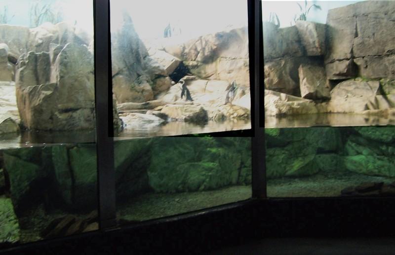Penguin tank