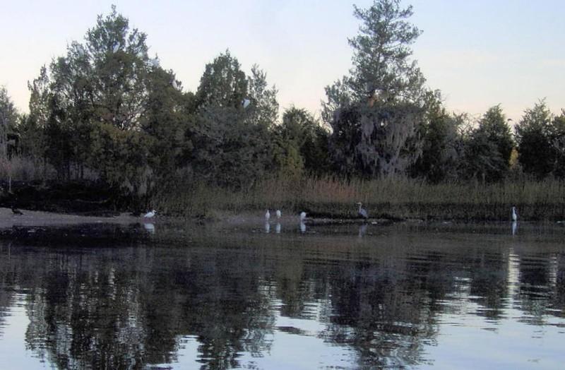 Wading birds at dawn