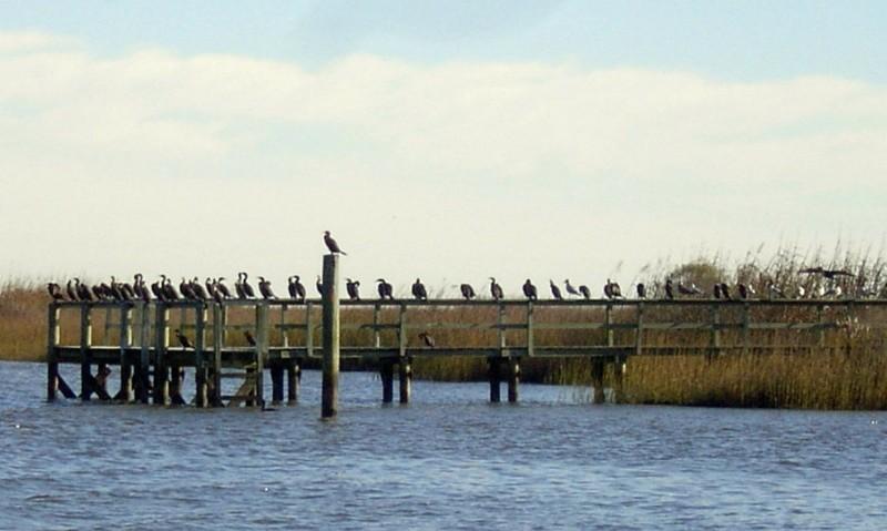 Birds sitting on the railings