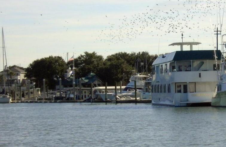 Flock of birds over the marina