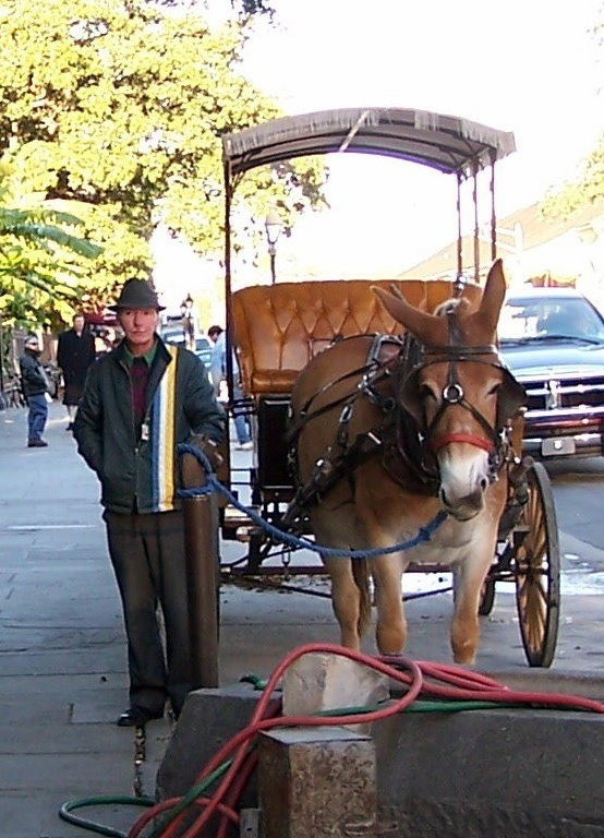 Mule carriage