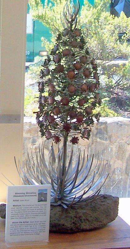 Case with display of flowering silversword