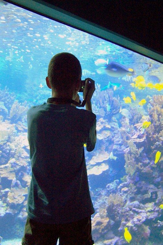 Grandson taking photos