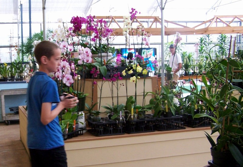 Grandson photographing orchids
