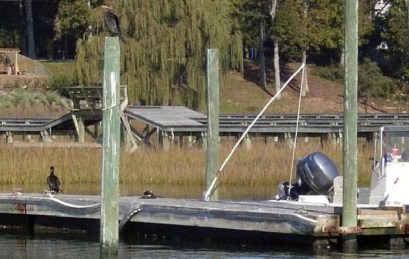 BIrds (cormorants?) on the dock