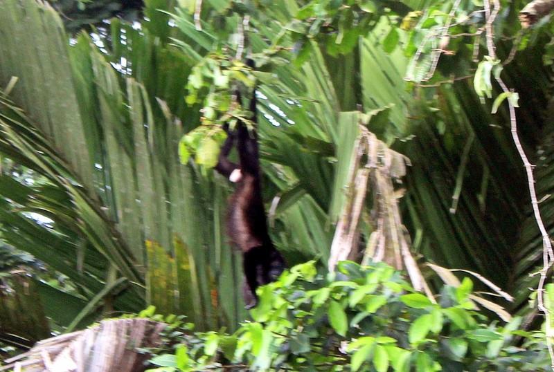 Monkey unzoomed