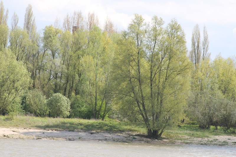 Clump of trees on shore
