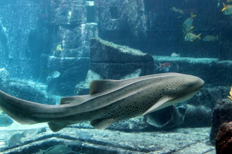 Another shark