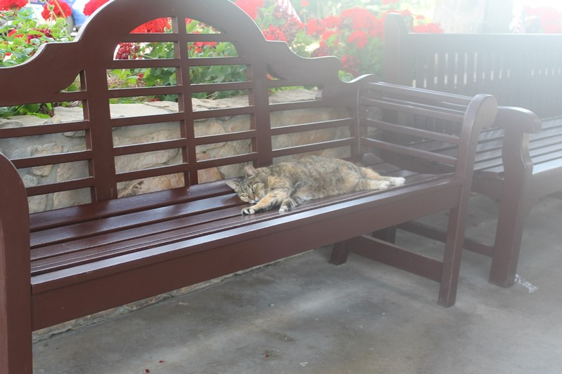 Dillard House cat