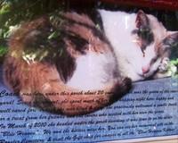 Blue Heaven cat history