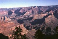 Desert Plants - Grand Canyon National Park