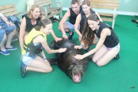 Petting a sea lion