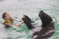 Dancing with the sea lion
