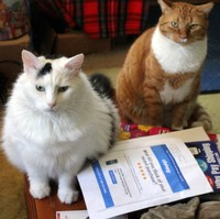 Crunch and Orange with the Petsmart letter