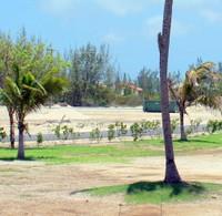 iguana on a palm tree trunk