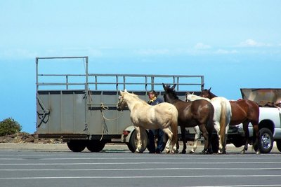 Trail ride horses at the top