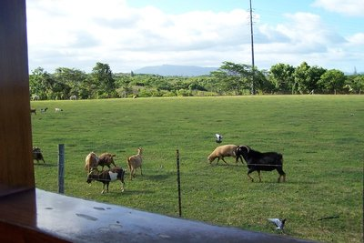 Horses on the left, and sheep and goats on the right