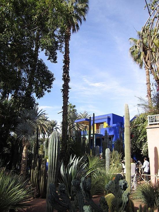 Blue house through the cacti