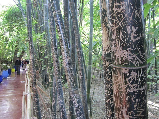 Grafittied bamboo in the garden
