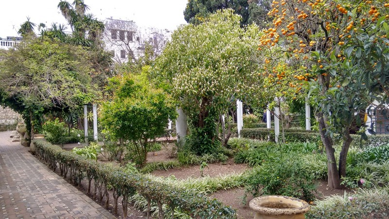 Tangier Kasbah an orange tree in the Sultan's garden