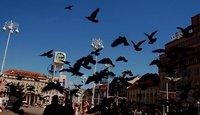 Zagreb Birds