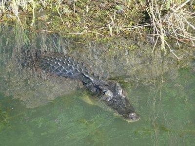 Mr Crocodile May I Cross Your River