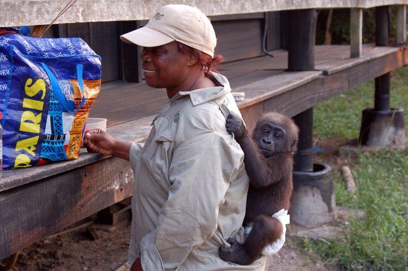 """""""Mama"""" Gorilla"""