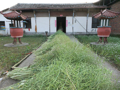 The Rice Field Temple Bike Adventures