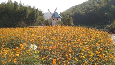 ZhenDongDa..enture__20_.jpg