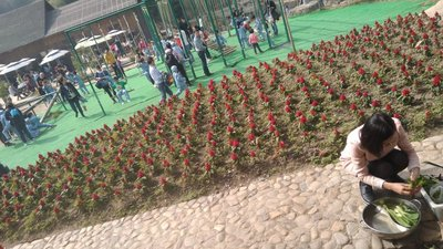 ZhenDongDa..enture__31_.jpg