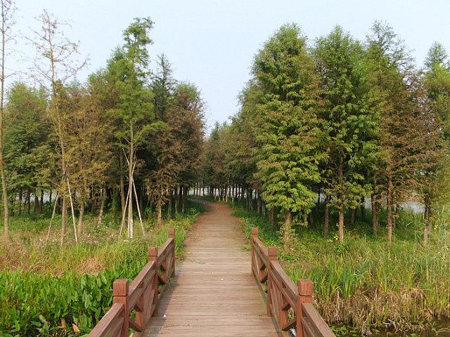Old Yellow River Wetlands Adventures