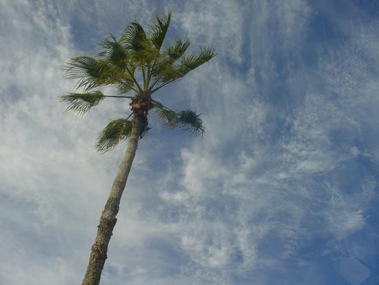 Good Bye Australia - Gold Coast 5