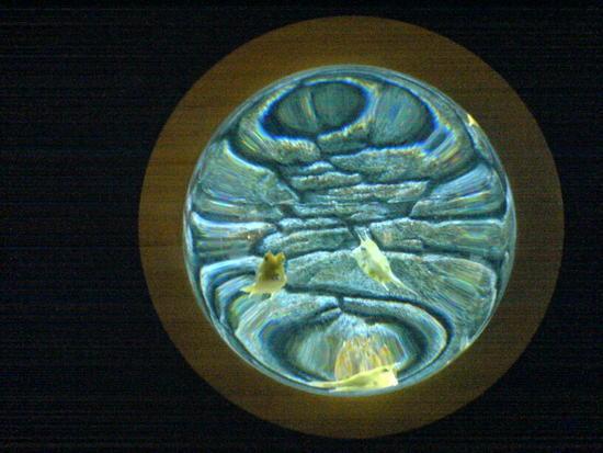 Underwater World & BBQ (15)