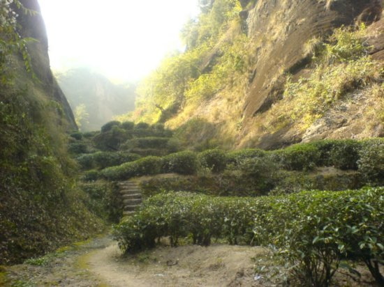 Wuyi Shan Day One 19