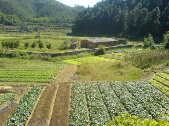 The Great Autumn Rice Harvest Ride 34